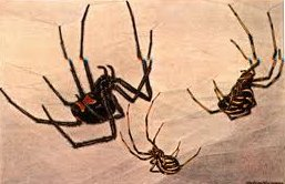 20131022-blackwidows.jpg